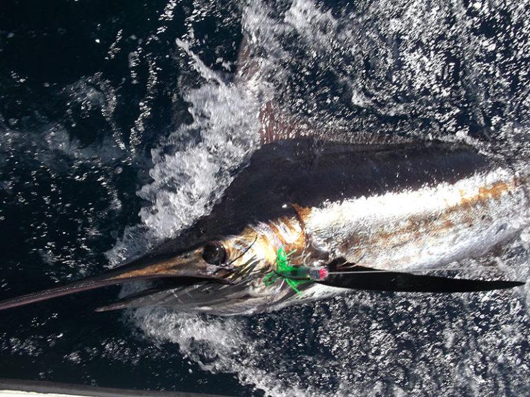 PBG Fishing Report March & April 2015