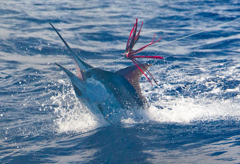 PBG Fishing Report May & June 2015