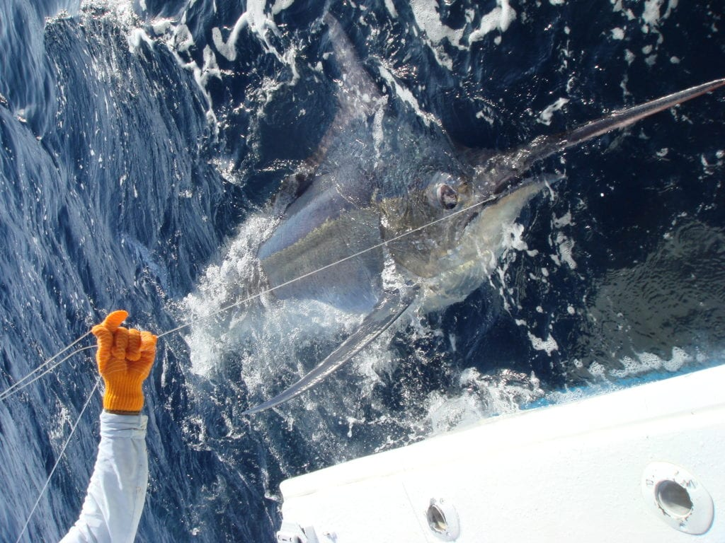 Panama Marlin Fishing