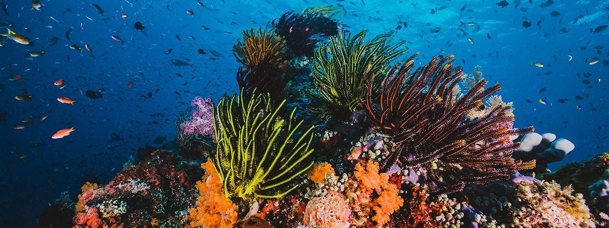 Panamanauticalclub_slideshow_Diving-min