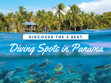 Discover the 5 Best Diving Spots in Panama