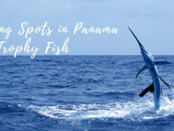 The Best Fishing Spots in Panama for Trophy Fish