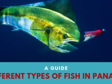 A Guide | Different Types of Fish in Panama