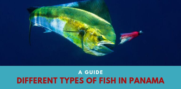 A Guide   Different Types of Fish in Panama