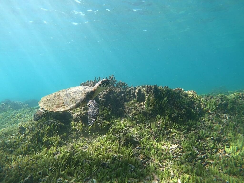 Panama dive packages