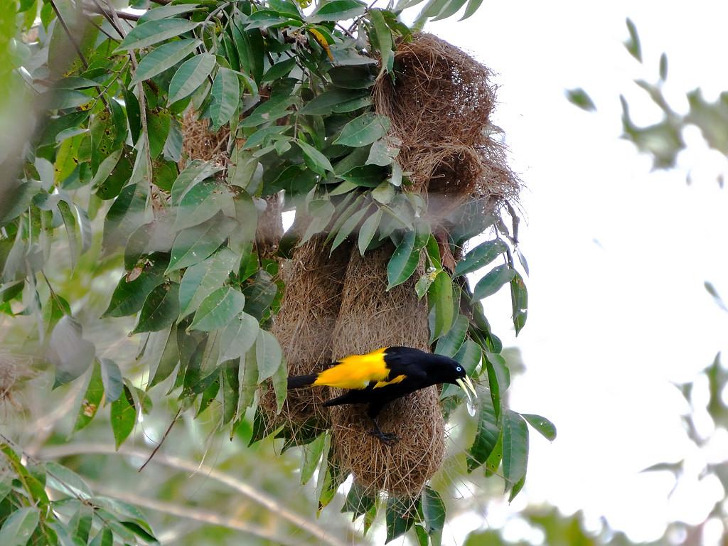 Panama bird watching
