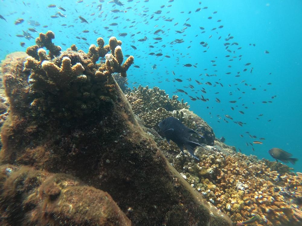 diving panama