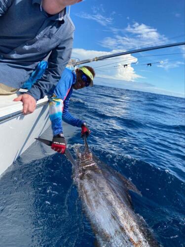 Panama Nautical Club Marlin Action