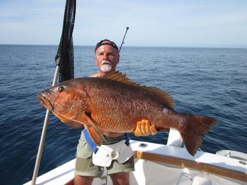 Cubera Snapper Panama Nautical Club
