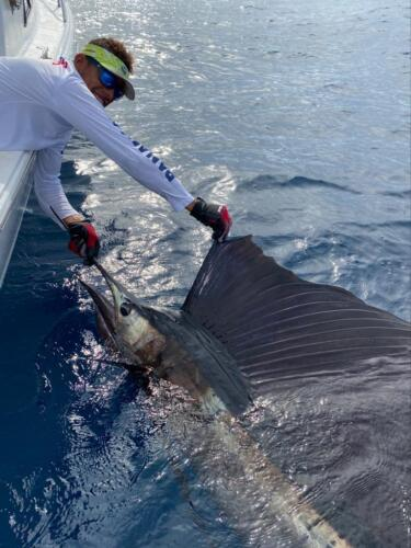 Panama Nautical Club - Sailfish